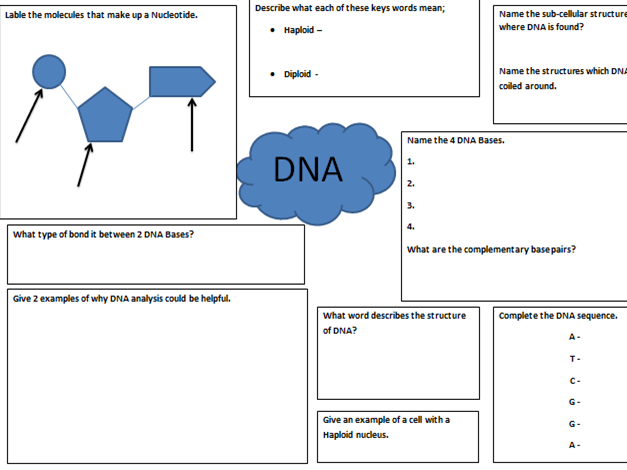NEW Edexcel 9-1 - Biology revision sheets - Enzymes and DNA