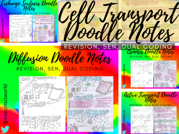 Cell Transport Science Doodle Notes