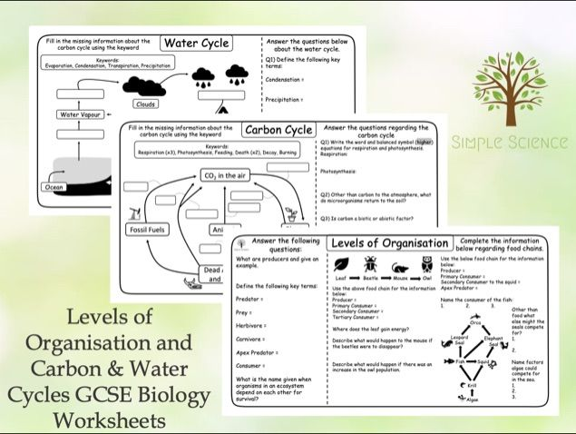 GCSE Biology - Levels of Organisation and Carbon & Water Cycles Worksheets