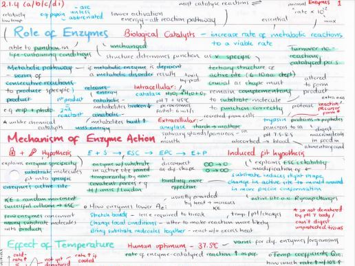 OCR A Level Biology Enzymes Revision Poster