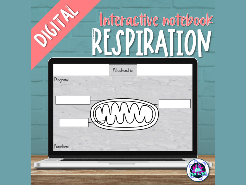 Cellular Respiration Digital Interactive Notebook