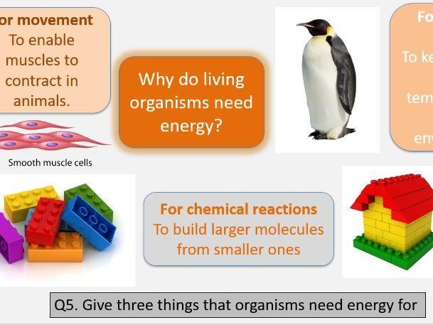 Bioenergetics AQA Foundation lesson bundle.