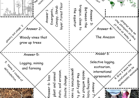 Rainforest chatterbox revision