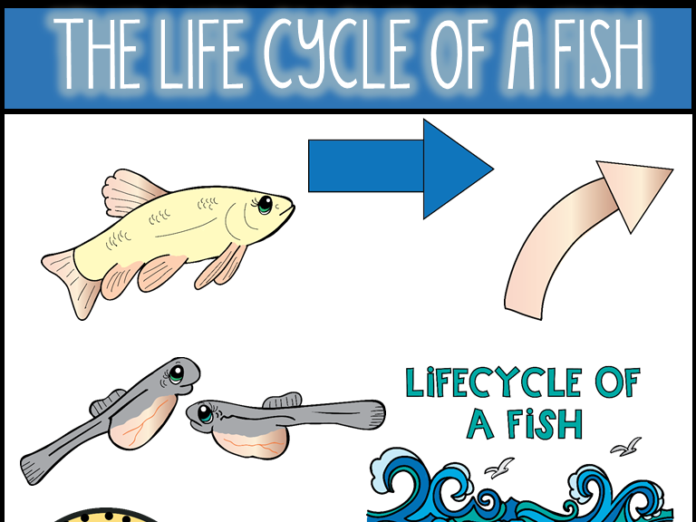 Life Cycle of a Fish Clip Art