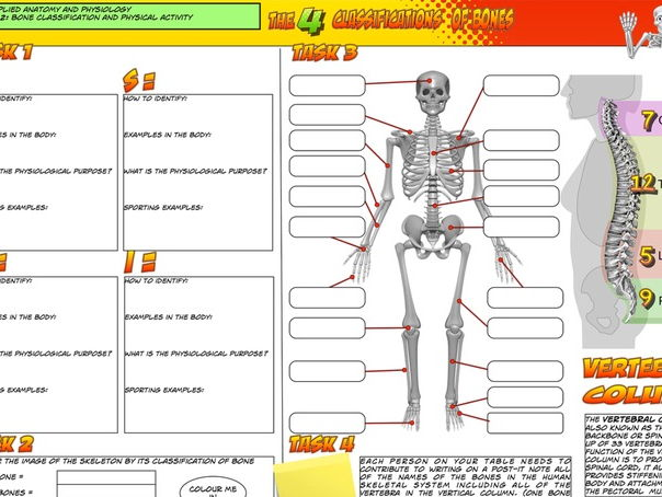 NEW Edexcel GCSE PE Unit 1 - Topic 1 - Lesson 2 - Bone Classification and Physical Activity - Activi
