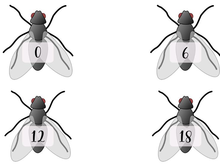 Multiplication Fly Swat