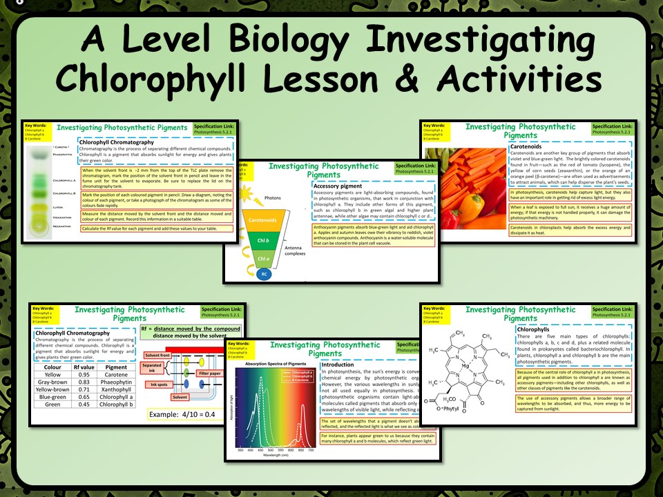 A Level Biology Investigating Chlorophyll Lesson and Activities