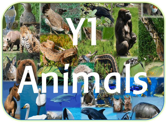 Image result for animals including humans year 1