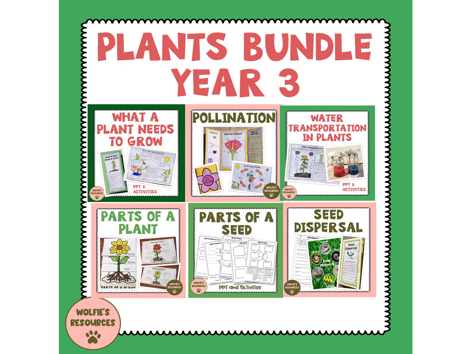 Plants Year 3