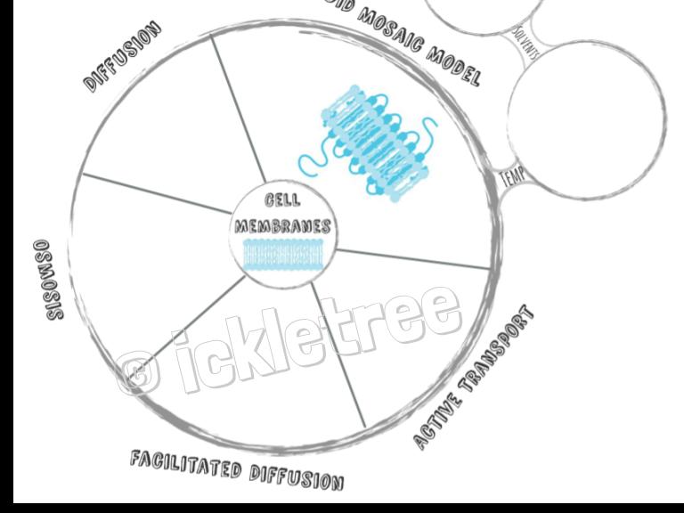 Membranes Revision Wheel