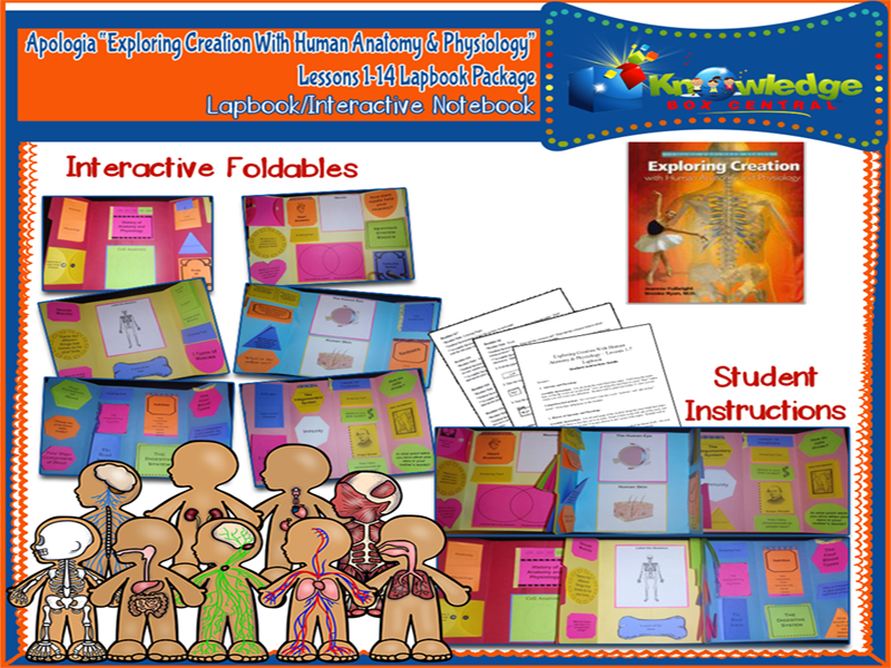 Apologia Exploring Creation w/ Human Anatomy & Physiology Lapbook ...