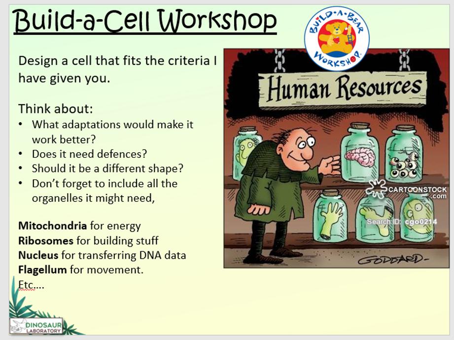KS4 B1.4 Specialised animal cells   Teaching Resources