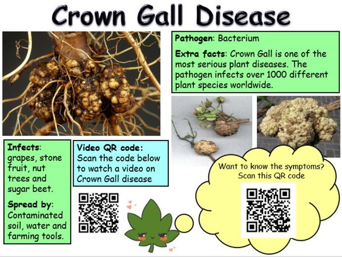 Plant Diseases for OCR 21st Century Science GCSE - interactive lesson