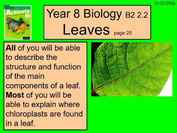 """A digital version of the Year 8 Biology B2 2,2 """"Leaves"""" lesson."""
