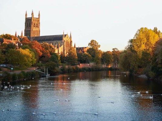 Spanish Worcester