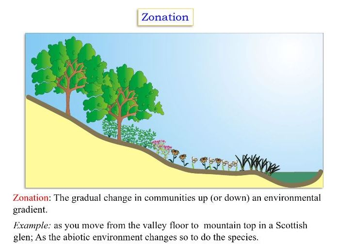 Ecology: x4 Narrated PowerPoint shows/WMV films on this A-level and IB topic