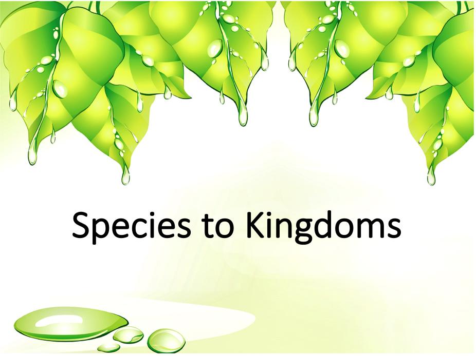 Species to Kingdoms