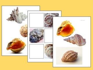 Shells Worksheets (Natural Forms)
