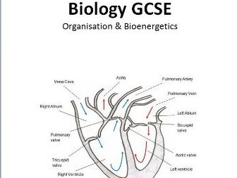GCSE Biology Topics 2 + 4 - Organisation + Bioenergetics AQA