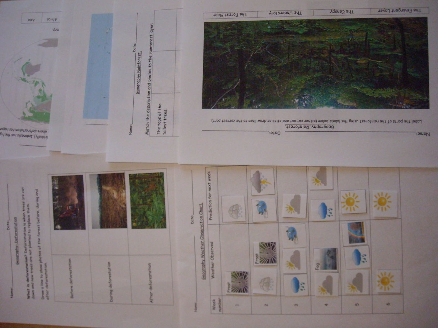 Geography Deforestation, Rainforest and Weather Chart SEN, Early Years, Primary and Preschoolers