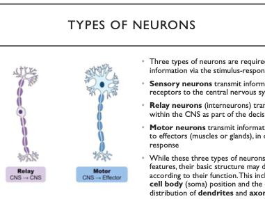 OCR A Biology A-level 5.1.3 Neuronal Communication, neurotransmitters, synapses