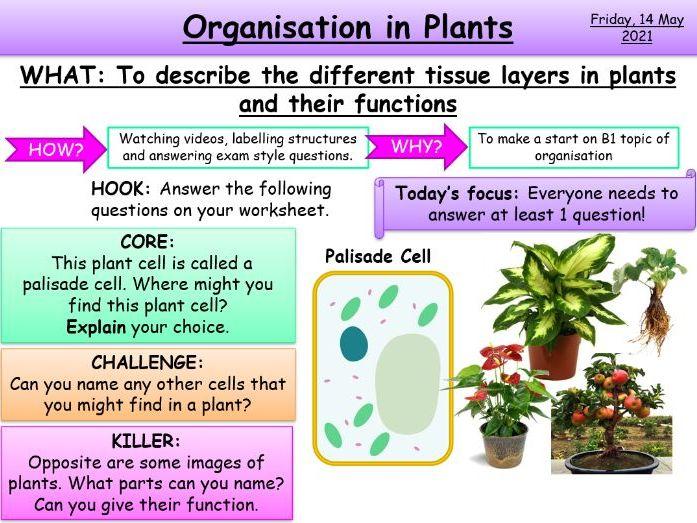 Organisation in Plants KS4 AQA Biology