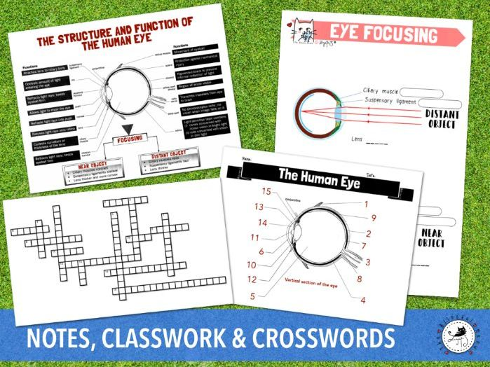 Human Eye Crossword (structure, function and focusing)