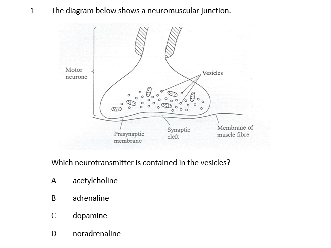 A Level Biology Muscles Multiple Choice with Answers