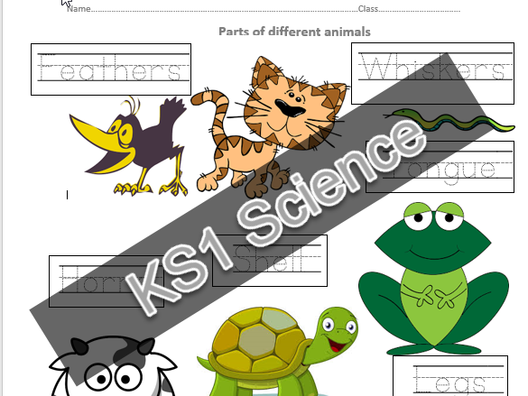 KS1 1 page activity parts of animals