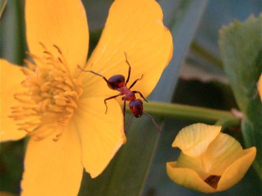 Ants: Insects: Photo Collection