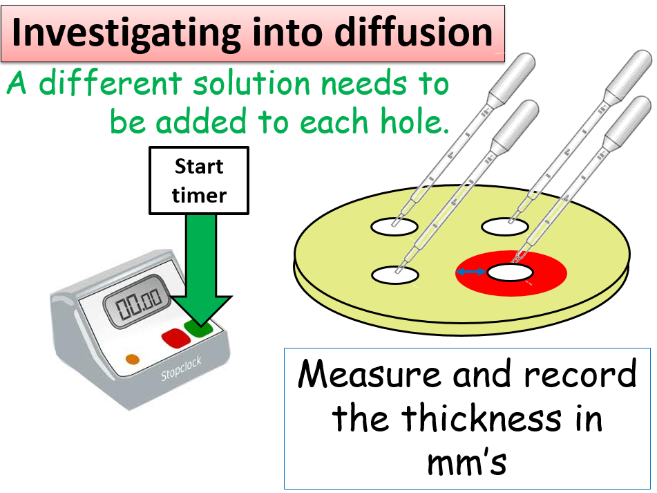 KS3 Biology lesson which investigates diffusion - PowerPoint
