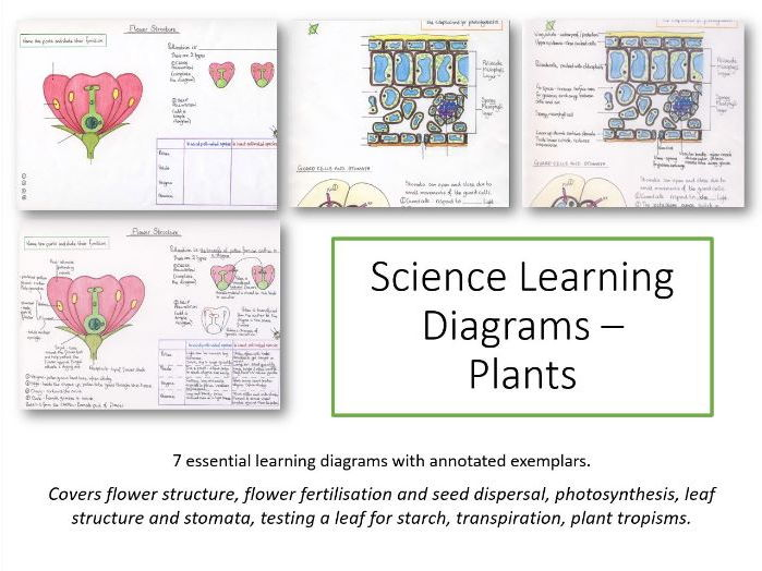 Plants Learning Diagrams