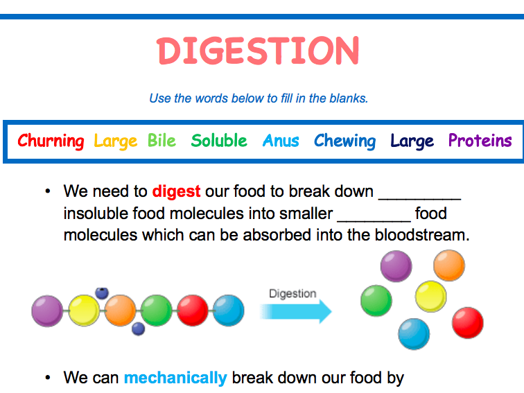 KS3 / KS4 - Digestion and Enzymes - Workbook