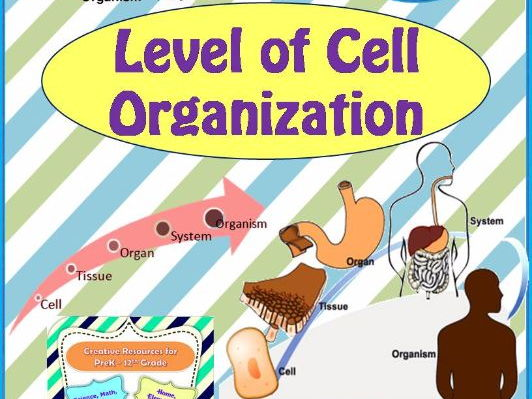 Level of Cell Organization - Unit Plan with worksheets