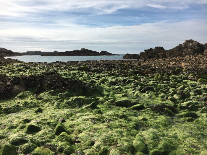 Seaweed: At the Seaside: Photo Collection