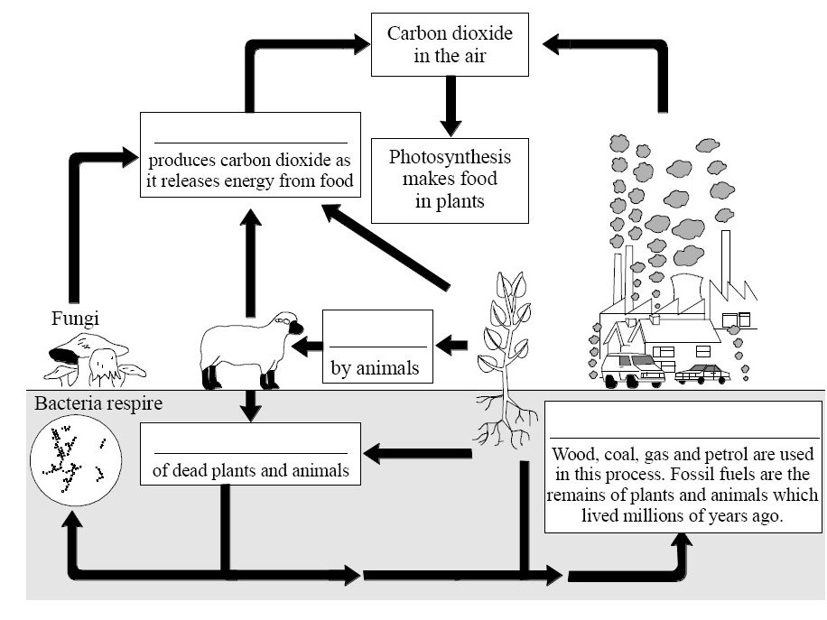 Carbon Cycle question sheets