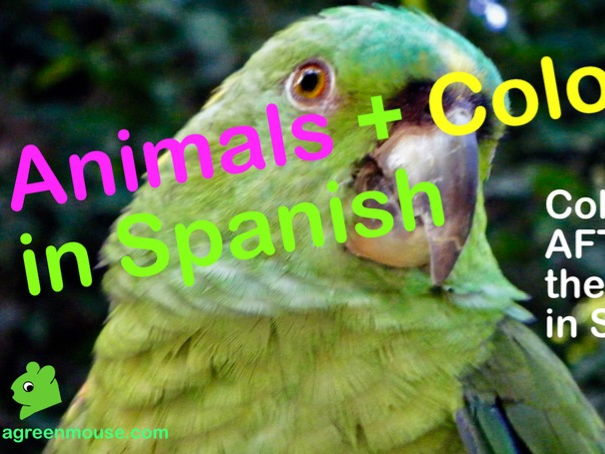 Animals + Colours in Spanish