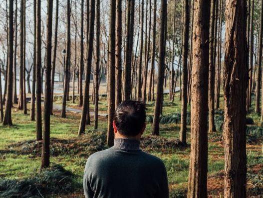 Robert Frost 'The Road Not Taken' - Poem Analysis