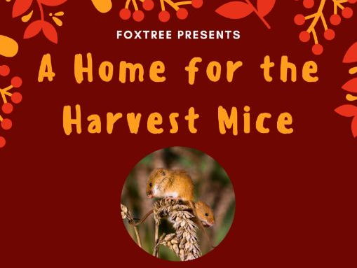 A Home for The Harvest Mice - a short harvest play including 5 songs