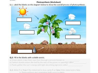Distance Learning | Photosynthesis - Worksheet