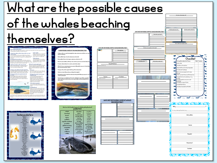 Writing an Information Report- What are the possible causes of whales beaching themselves?