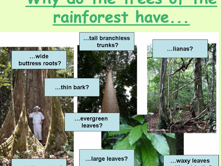 L2 – Biodiversity Tropical Rainforests Ecosystems Edexcel A GCSE (1-9)