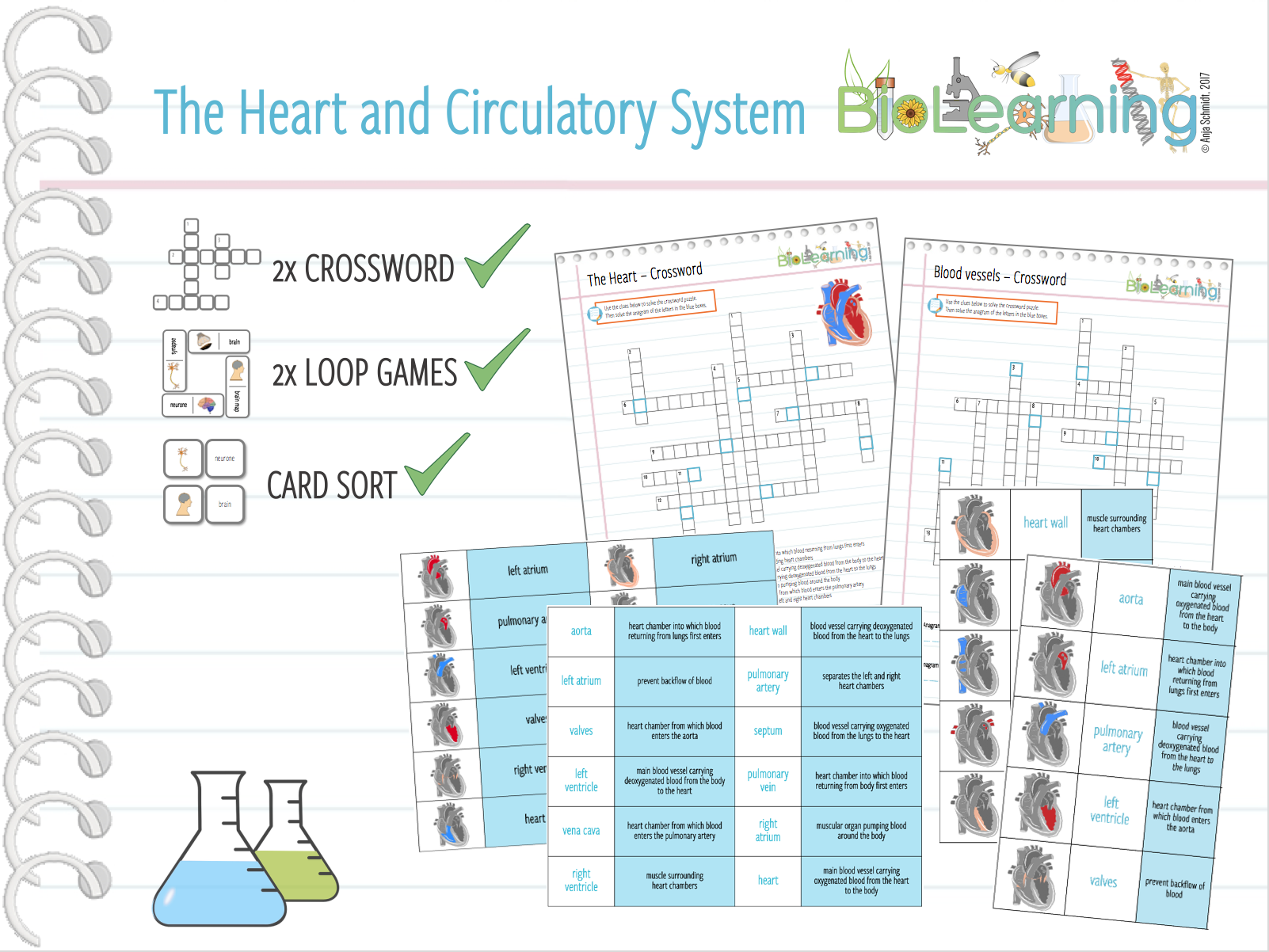 The Heart and Circulatory System 5x -  Loop Games, Crosswords, Card Sort