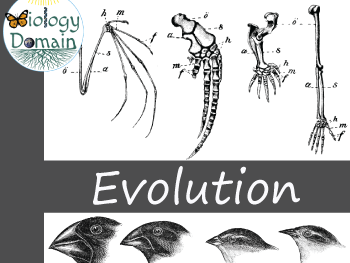 Evolution and Natural Selection Crossword and Word Search
