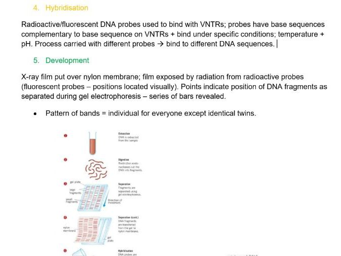 AQA AS/A-level Biology Genetic Fingerprinting Notes