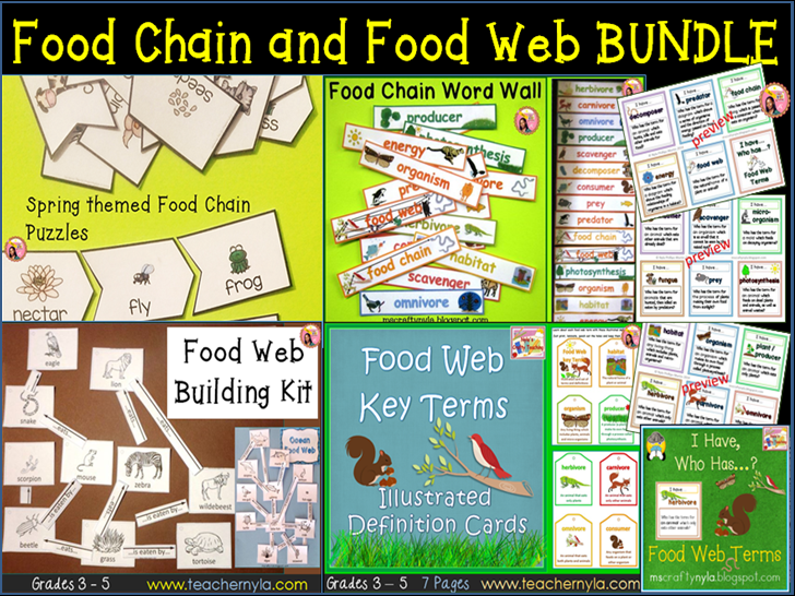 Food Chain and Food Web Bundle