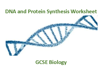 GCSE Biology DNA and protein synthesis worksheet