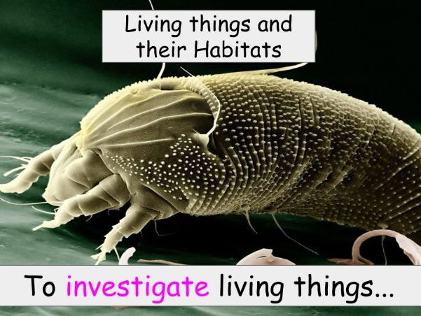 Year 4 - Living things and their Habitats