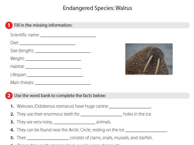 Endangered Species - Walrus