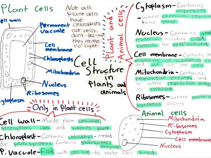 Cell Biology Mind Maps GCSE 9-1 Biology